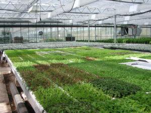 Inomhusodling av växter